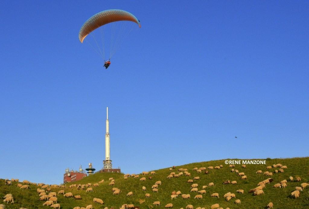 Les moutons viennent tondre au sommet du puy de Dôme